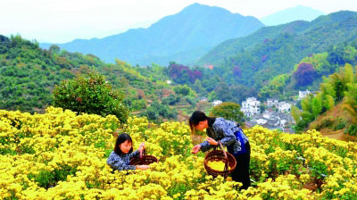 """让美丽乡村更有""""里子"""" ——求解乡村振兴的文化议题 - 双乐居士 - 双乐居士"""