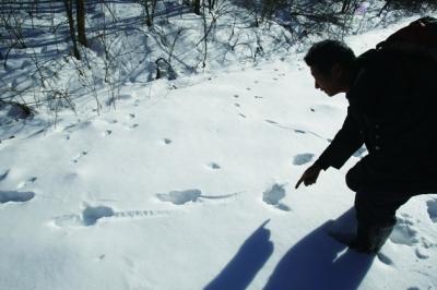 冬天的动物脚印