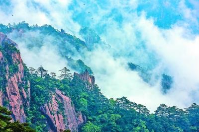 6月11日,大雨初霁,安徽黄山风景区云雾弥漫,云海在山谷中涌动起伏