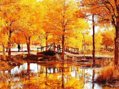 甘肃省酒泉市金塔县胡杨林基地景区,金黄色的胡杨层层叠叠