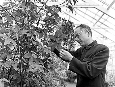 植物學家的人文視野