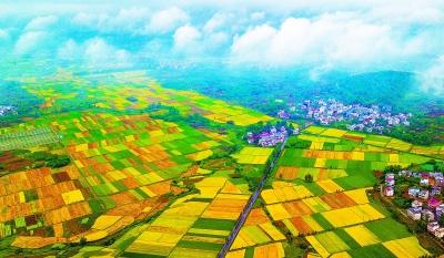 正值丰收季节,江西省新余市渝水区水北镇的农田呈现一派色彩斑斓的